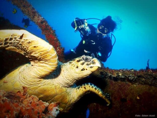 Buceo con tortugas en Porto de Galinhas, Brasil