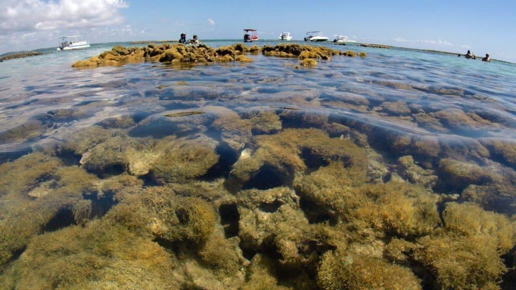 Natural Pools in Carneiros beach tour